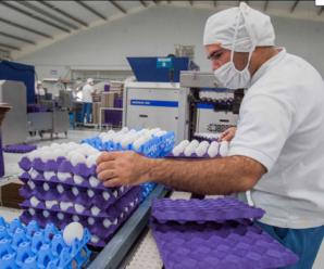 Fabrica Necesita Personal para Empacar Huevos Blancos desde casa Plazas Limitadas