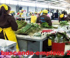Floreria Nacional Solicita Personal para armar paquete de rosas desde casa por San Valentin Plazas Limitadas